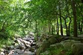 Dalcheon Valley