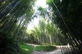 Juknokwon, Bamboo Park