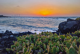 Cactus Growing on Basalt
