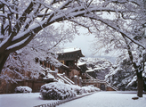 Bulguksa Temple in Winter