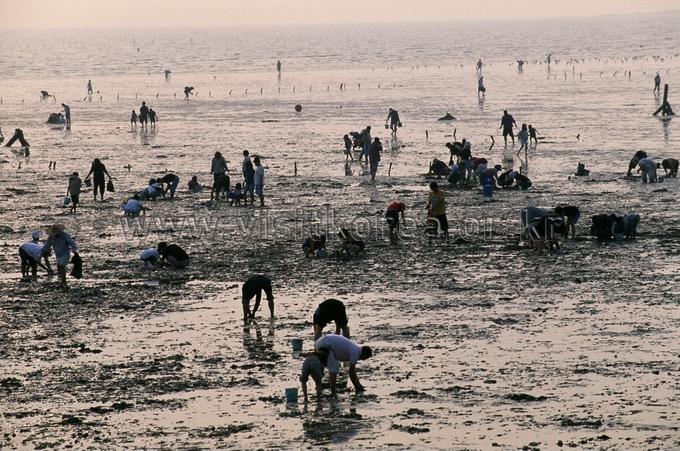 Gungpyeonghang Port Tide-land Festival
