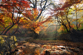 Autumn Scenery..