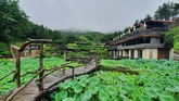 Lotus Leaves Embracing Suseonsa Temple