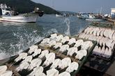 Nokdonghang Harbor