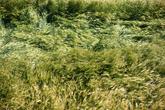 Cheongsando Island Gudeuljang rice paddy