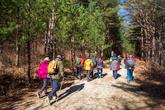 Uljin Geumgang Pine Trail