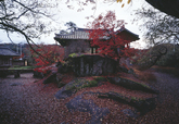 Cheong-amjeong Pavillion in Autumn