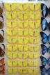 Hampyeong Butterfly Festival