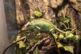 Damyang Insect Zoo