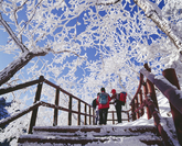 Snowflowers on Mt.Bukhansan 