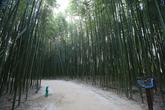 Simni Bamboo Grove