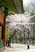 Spring of Deok..