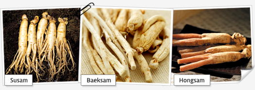 ginseng02