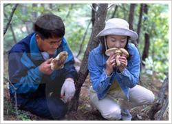 Yangyang Songi Mushroom Festival