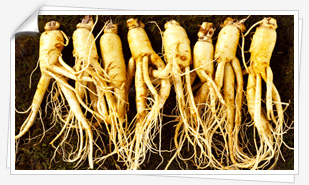 Incredibly Healthy Herb: Ginseng