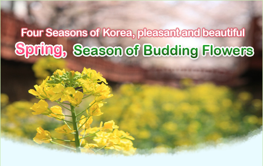 Four Seasons of Korea, pleasant and beautiful
