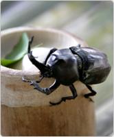 Beetle Festival