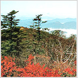 Mt. Odaesan National Park