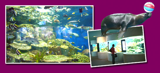 63 Sea World - Have Fun Watching Diverse shows at the Aquarium