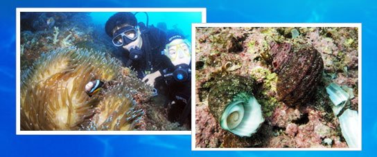 The photo on the left is a two-man scuba diving, sea kelp, which is attached to the right cow photos