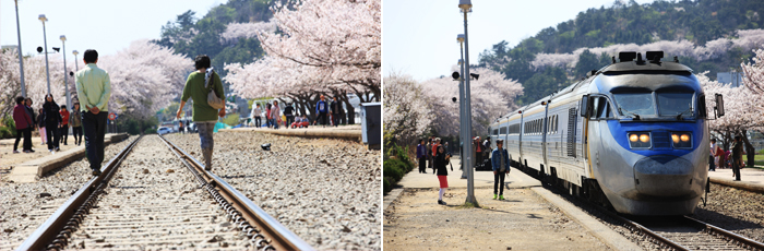 Gyeonghwa Station related photos. Walking on railroad tracks and on the left is in the vicinity of the cherry on top of the railway line on the right and those who are watching the train and prepare people to ride a unicycle around the photo.