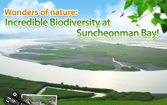Wonders of nature: Incredible Biodiversity at Suncheonman Bay!