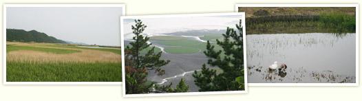 Suncheonman Bay