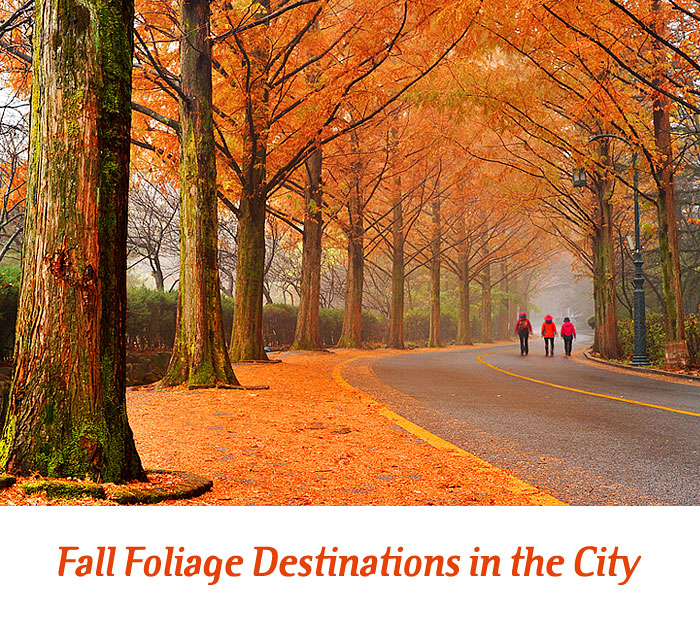 Fall Foliage Destinations in the City