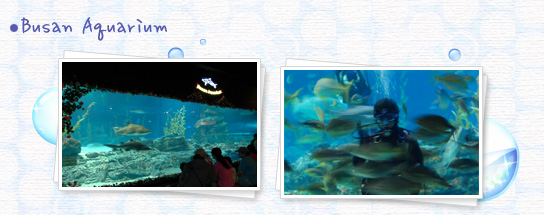 Busan Aquarium - Busan Aquarium internal Aquarium is an aquarium in the waving person photographers photography.