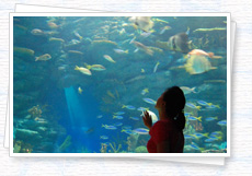 Troops moving in the aquarium fish to see the woman in the photo