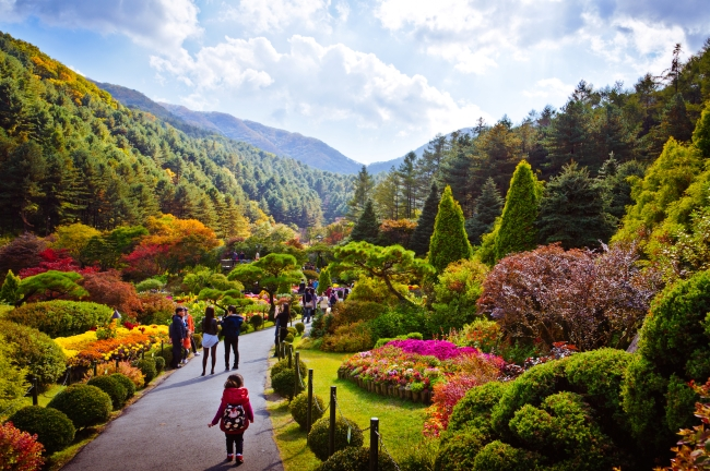 chrysanthemum exhibition at the garden of morning calm official korea tourism organization
