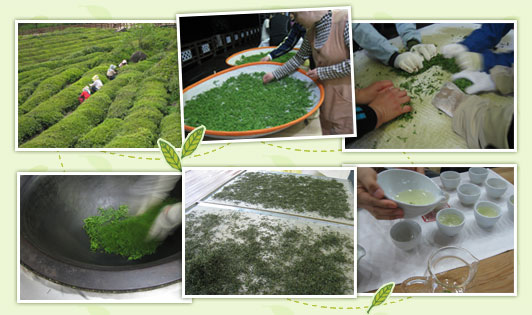The Hadong Wild Tea Cultural Festival: Working at a Green Tea Plantation