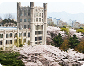Kyunghee University's Cherry Blossom Road