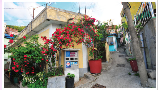 The alley in front of the stores and shops in front of rose flowers with small flower bed.