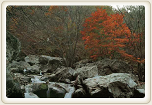 Chiak mountain water flows in a valley in the autumn leaves photo