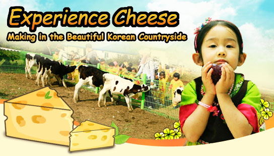 Experience Cheese-Making in the Beautiful Korean Countryside