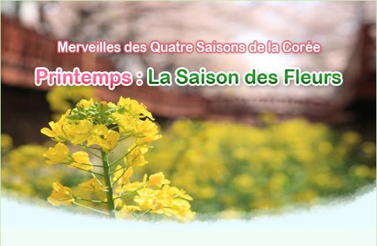 Printemps : La Saison des Fleurs