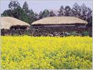 Village folklorique de Seongeup