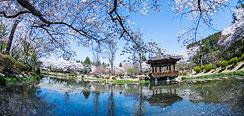 Corée Sud Restauran : Gyeongju