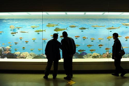 在海洋生物主题公园1层展示馆中,可了解到海底鱼类的相关信息.