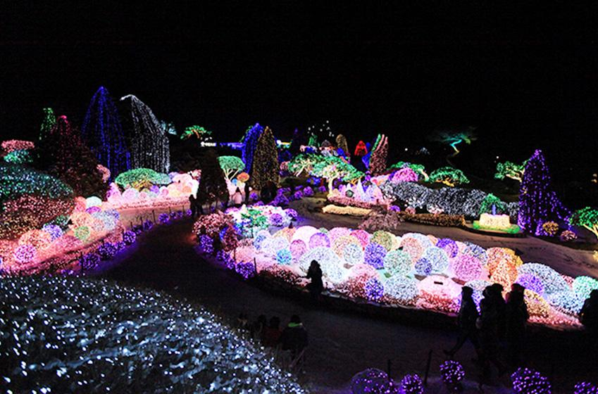 「五色星光庭園展」(圖片來源: 晨靜樹木園)