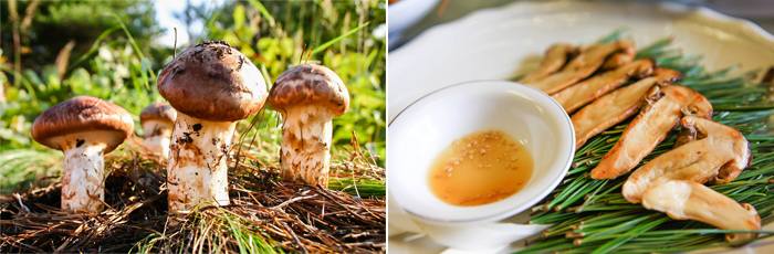 Photo: Wild pine mushroom (left) / Grilled pine mushroom (right)