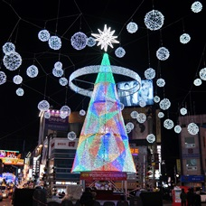 Christmas Trees in Seoul & Busan!