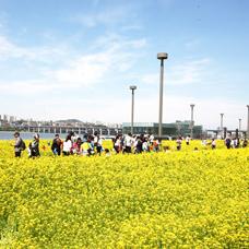 Spring Arrives in Korea! Hangang River Relay Spring Flower Festival