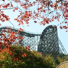 Fall Foliage Courses for all at Everland