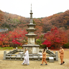 Experience the Traditional Temples of Korea! Special Templestay Programs for Foreigners