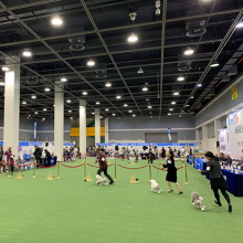 Korea Premier Dog Show will be held Dec. 20-22