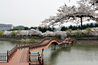 Experience Cherry Blossom Festival and Marathon in historic Gyeongju