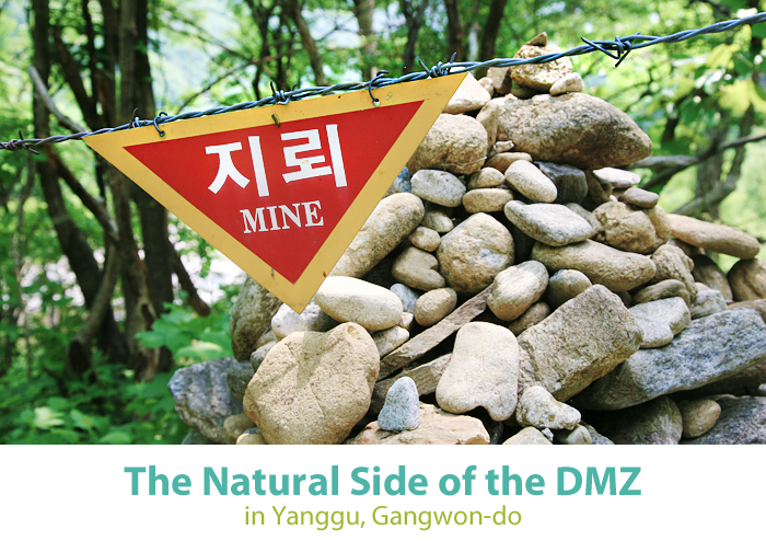 The Natural Side of the DMZ in Yanggu, Gangwon-do
