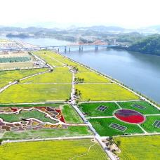 Spring Awakes at Changnyeong Nakdonggang Yuchae Festival